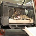 perros-en-el-coche