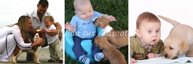 bebe-perro