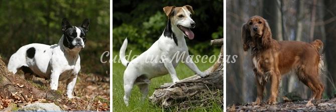 marcaje-de-perros