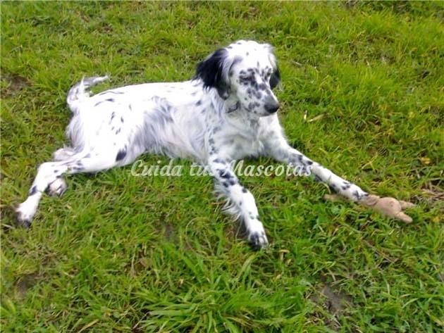 ziska después de la operación de cadera