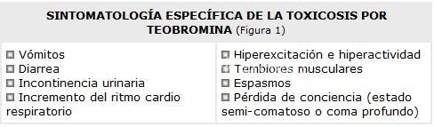 sintomas-teobromina-o-chocolate