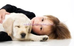 autismo perro ayuda
