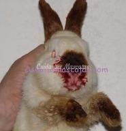 hemorragia virica