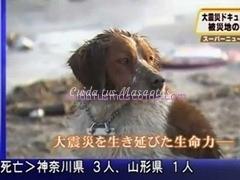 perro trajedia japon