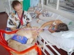 perros-hospital