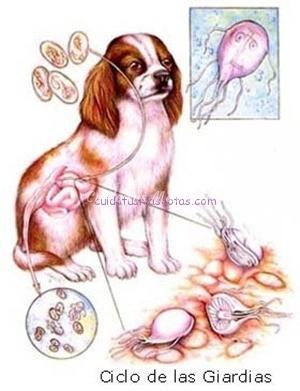 enfermedades de perros que se contagia a humanos