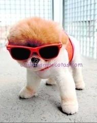 boo perro facebook seguidores
