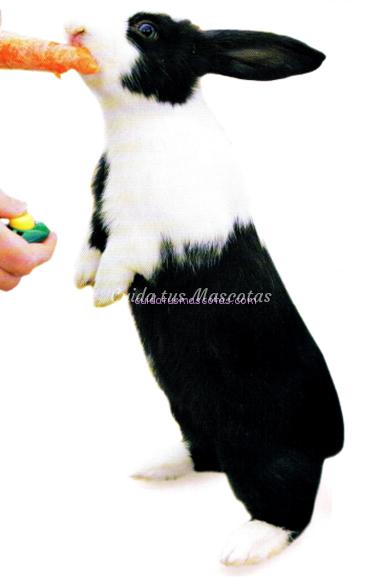 clicker conejos