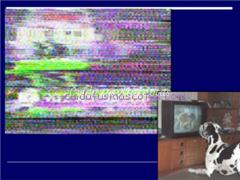 lo que ve un perro en la tele