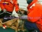perro rescatado sunami 1