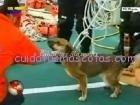 perro rescatado sunami 3