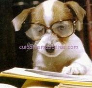perro_estudioso