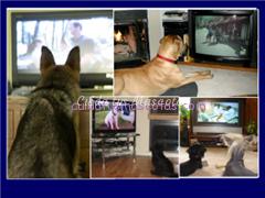 perros ven la tele