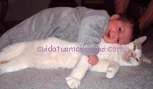 gato y bebe