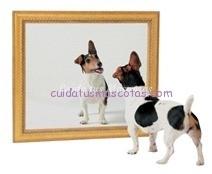 perro-espejo
