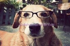Perro-inteligente