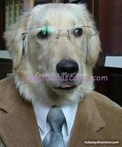 ejercicios-perro-inteligente
