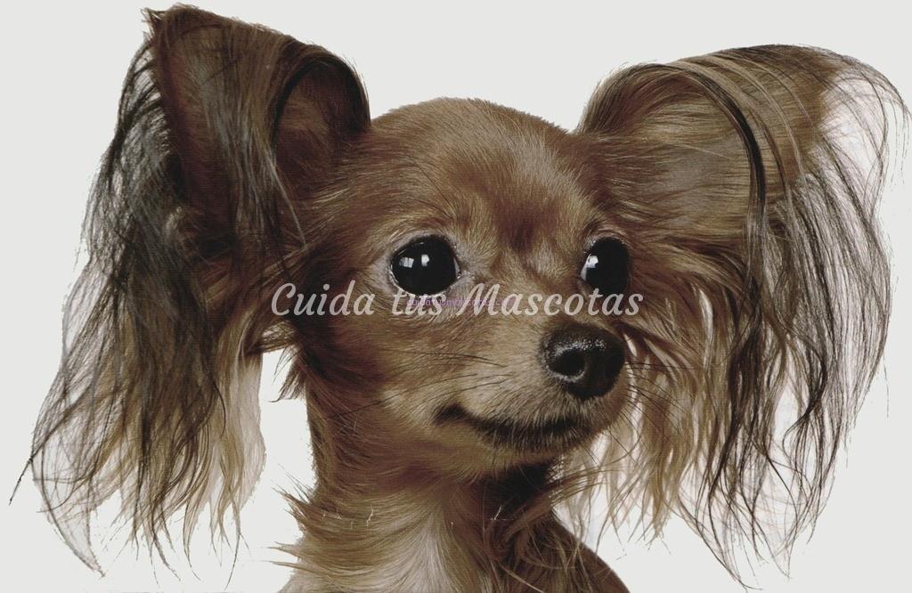 Prevenir y detectar la otitis en los perros – Cuida tus Mascotas