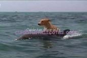 perro y delfin amigos