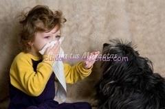 alergia mascotas vacuna