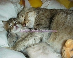 mama gatita con su hijo gatito