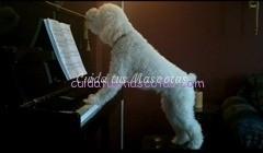 perro-toca-el-piano