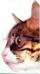 vacuna gato