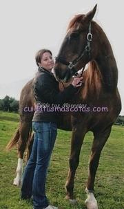veterinario caballos