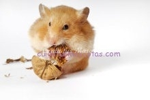 alimentacion hamster