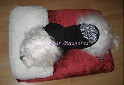 cama con almohada perro