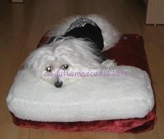 cama para perro con almohada