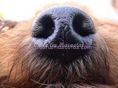 detectar cancer perro