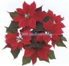 flor de navidad mascotas