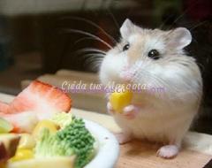 hamster maiz