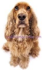 oler cancer perro