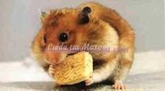 pienso para hamster barcelona