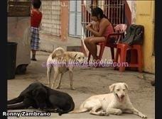 reproduccion mascotas