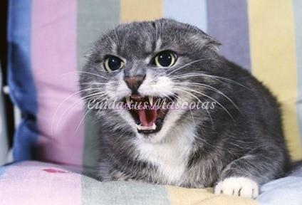 territorialidad-gatos