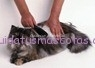 cepillar-al-gato