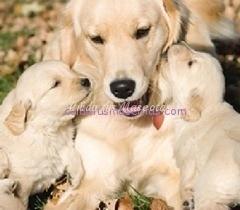 perros reconocen