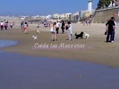 perros_en_la_playa