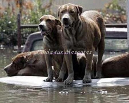 huracan mascotas