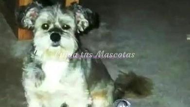 perro-clonado-trouble