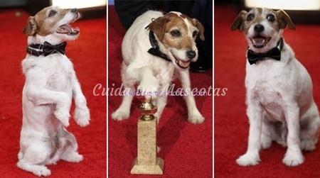 perro-ganador-globo-oro
