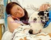 perro-visita-hospital-amo