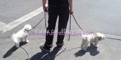 terapia-con-animales-enfermedad-mental
