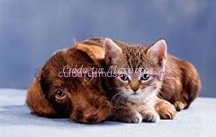 alergia-perro-gato