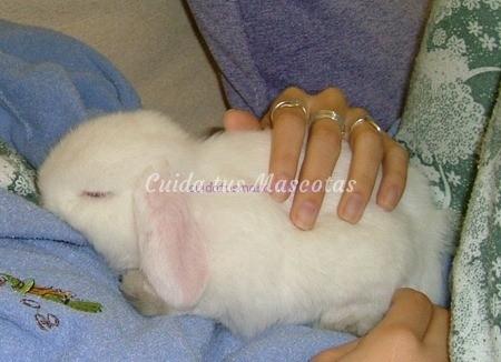 belier-conejo-peluche