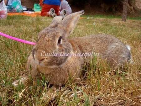 conejo-relajado