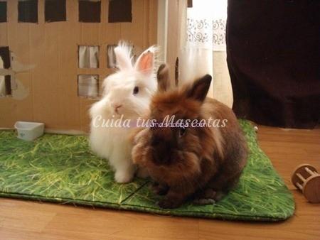 conejos-sociables